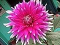 Flower.5.jpg