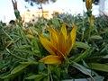 Flower in Hims.jpg