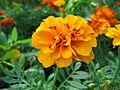 Flowers (195).jpg