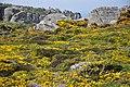 Flowers in Brittany, 2016.jpg