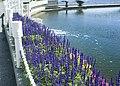 Flowers in the park (5171095672).jpg