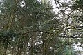 Forêt @ Alex (51097276372).jpg