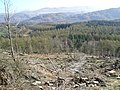 Forest cutting on Irton Pike - geograph.org.uk - 746620.jpg