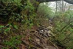 Forest in Yakushima 57.jpg