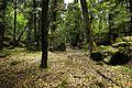 Forest jp-01.jpg