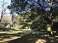 Forest near Unzen Resort Hotel 2.jpg