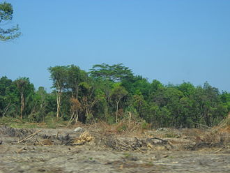 Economic growth - Forest in Indonesia being cut for palm oil plantation.