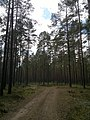 Forest path - panoramio (6).jpg