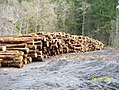 Forest products - US Forest Service - October 2017 03.jpg