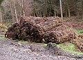 Forestry operations - brash bales - geograph.org.uk - 1623190.jpg
