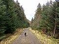 Forestry road, Glen Brittle - geograph.org.uk - 1185843.jpg
