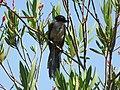 Formosa birds.jpg