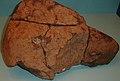 Found in the Antelope Valley, California in April 1948, Neenach Meteorite (cropped).JPG