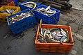 Fresh catch of fish, Velankanni Beach 3.jpg