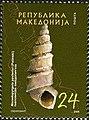 Freshwater Snail (Macedopyrgula pavlovici).jpg