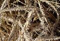 Frost, Scorhill Down - geograph.org.uk - 1710578.jpg