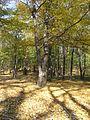 Fruška gora - šuma u jesen 2.jpg