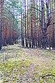 G. Ryazan', Ryazanskaya oblast', Russia - panoramio (9).jpg