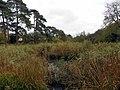 GOC Sandridge to Harpenden 100 Southdown Ponds (8245177148).jpg