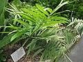 Gardenology.org-IMG 2561 rbgs11jan.jpg