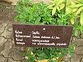 Gardenology.org-IMG 7725 qsbg11mar.jpg