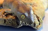 Gecko de Delcourt Hoplodactylus delcourti GLAM MHNL 2016 3742.jpg