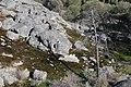 Gibraltar Rocks - panoramio.jpg