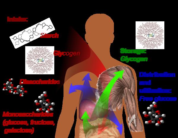 Structural Biochemistryorganic Chemistrycarbohydrates Wikibooks