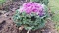 Godawari Botanical garden 26.jpg