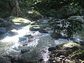 Gold Coast Hinterland Great Walk 4 Stevage.jpg