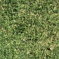 Grass Texture.png
