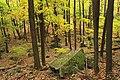Gravel Family Nature Preserve (9) (29745945934).jpg