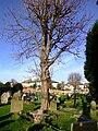 Graveyard - geograph.org.uk - 314988.jpg