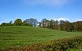 Green Field (3518625576).jpg