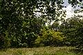 Green Park - panoramio (1).jpg