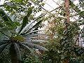 Greenhouse AmericanTropics BotGardDresden070219 072.jpg