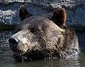 Grizzly Bear 4 (7974457922).jpg