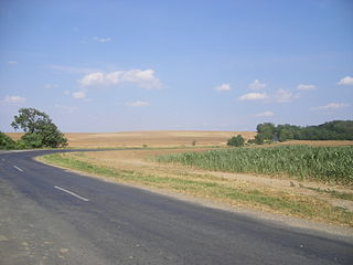 Little Hungarian Plain plain