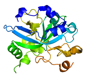 DNA-3-methyladenine glycosylase - Image: HAAG