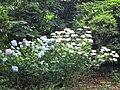 HB Rhodopark Sommer 1.jpg