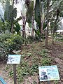 HK 中環 Central 遮打花園 Chater Garden flora green leaves n trees March 2020 SS2 76.jpg