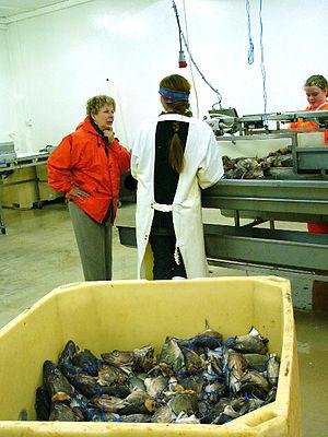 Fish factory - Image: Halteyri 04