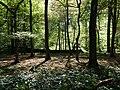 Hambach forest 48.jpg
