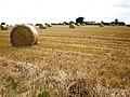Harvested field near Bugthorpe - geograph.org.uk - 1428415.jpg