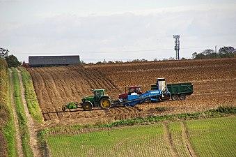 Harvesting Potatoes near Barton Hill Farm - geograph.org.uk - 2122214.jpg