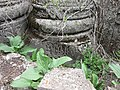 Havuts Tar (cross in wall) (104).jpg