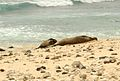 Hawaiian Monk Seal and Pup (6225159339).jpg