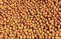 Hawthorn fruits, Malatya 02.jpg