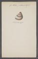 Helix pileus - - Print - Iconographia Zoologica - Special Collections University of Amsterdam - UBAINV0274 089 01 0032.tif