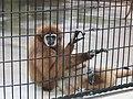 Henry Vilas Zoo IMG 2393.jpg